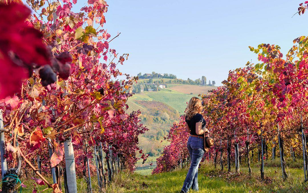 Le 10 immagini che ispirano una visita a Castelvetro di Modena in autunno